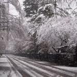 観光協会  雪